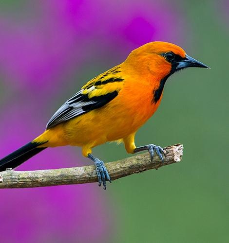 Bird Watching in Puerto Vallarta