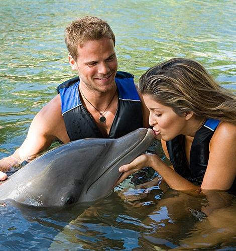 Dolphin Swim Adventures in Mexico